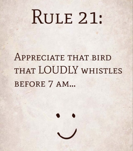 Rule 21: Appreciate that bird that LOUDLY whistles before 7 AM.